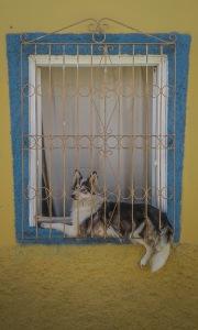 DogWindowSantaLucia